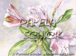 Pamela Schick Alstroemeria Flowers Watercolor